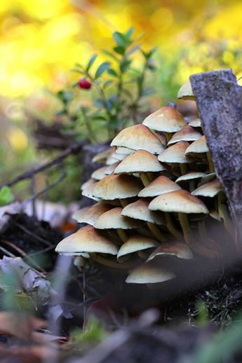 Pilze sind spannende Lebewesen. Sie können giftig aber auch nützlich sein. Als Speisepilz oder in der Heilmedizin finden sie Anwendung.